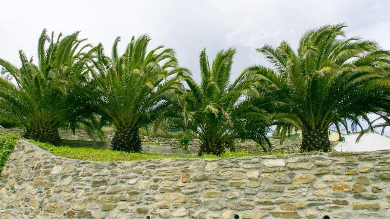 Palmtuin in Ribadeo