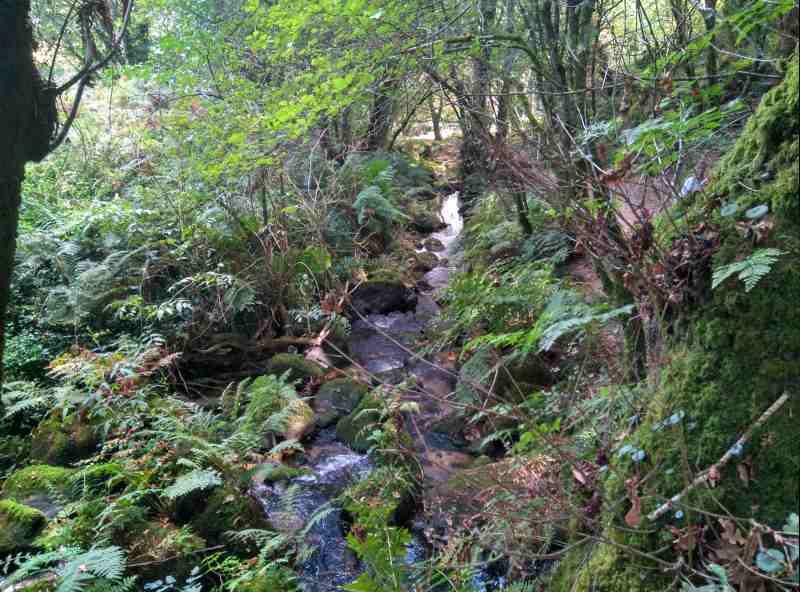 Watervalletjes in het bos