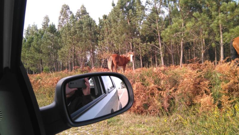 Wilde paarden langs de weg