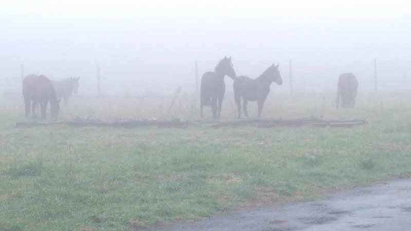 Mist hoort bij het klimaat in Galicië