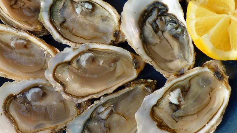 Ostras - Oesters