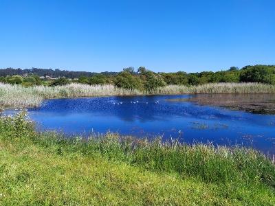 De lagune Bodeiro, O Grove