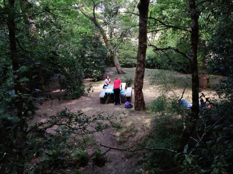 Picknicken in het bos