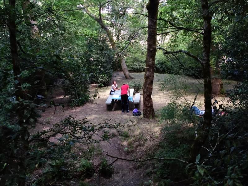Picknicken in het bos