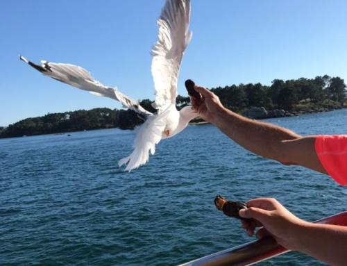 De Mosselboot, varen in de Rías Baixas