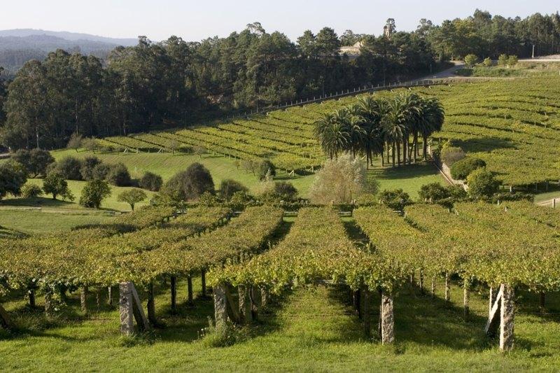 Albariño wijngaarden