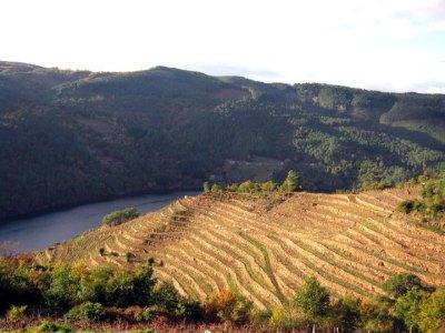 Wijngaarden Ribeira Sacra