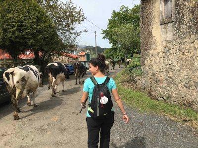Taalreis naar Santiago de Compostela